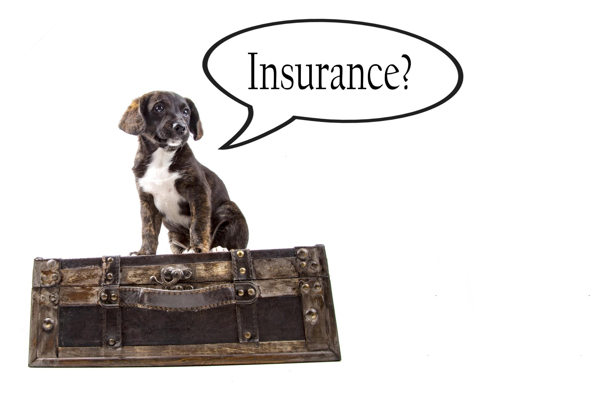 insurance-background-with-dog-1474825546uT0